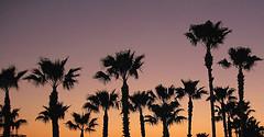 orlando-florida-sunset