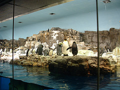 penguin-encounter-seaworld-orlando-florida