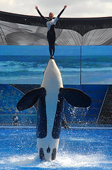 shamu-sea-world-orlando-florida