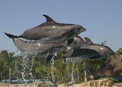dolphins-discovery-cove-orlando-florida